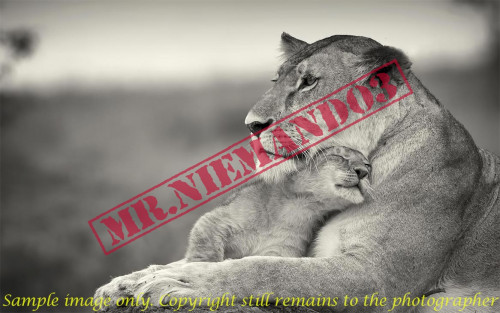 Watermarking Images using PHP - CodeMint Mint for Sale